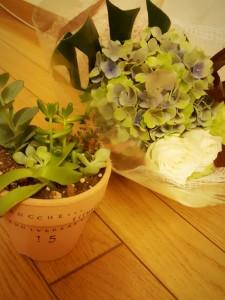 1カーサ花