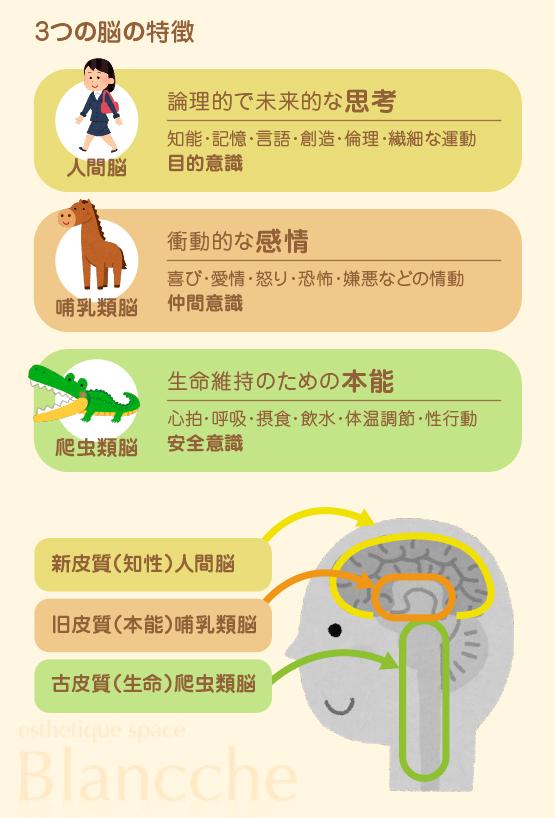 3つの脳の特徴